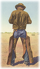 A cowboy on the range wears chaps for protection.